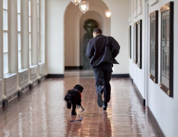Mensagem tocante – e inusitada: ex-presidente poderoso vai a público se despedir de cãozinho de estimação